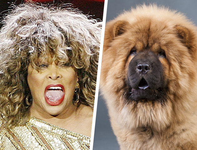 Celebrities Look Like Dogs