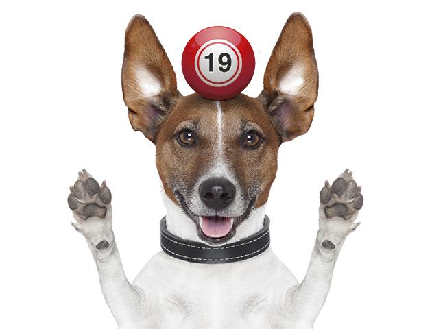dog with bingo ball