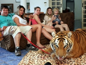 Ary Marcos And His Full Grown Tigers