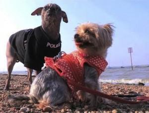 Newly-Wed Dogs Go On Their Honeymoon