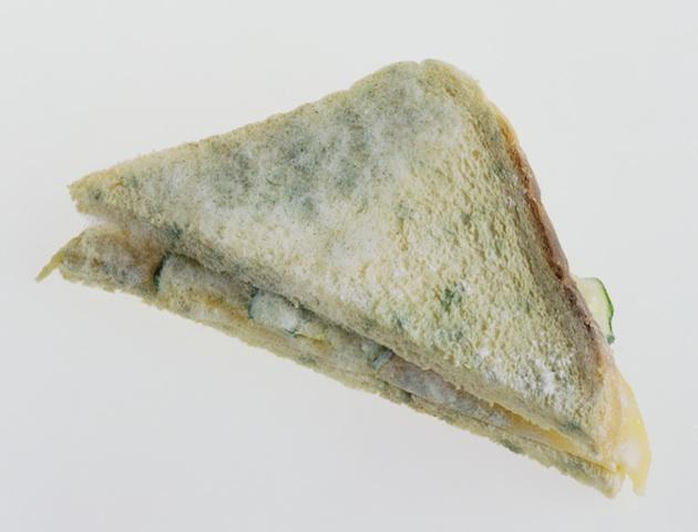 bread mold imrad essay