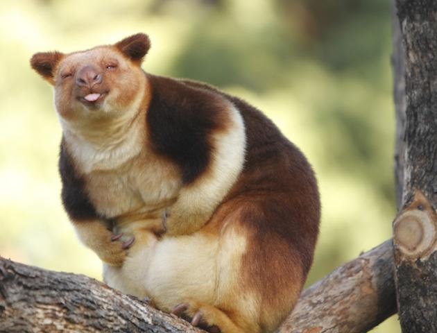 Weird Animals Cute 10