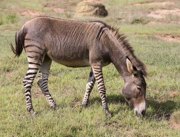 cute animals: zeedonk
