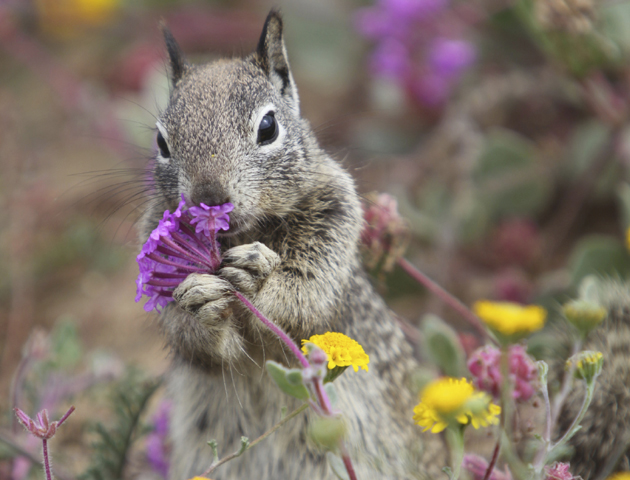 12 cute spring animals - Life Death Prizes - photo#33