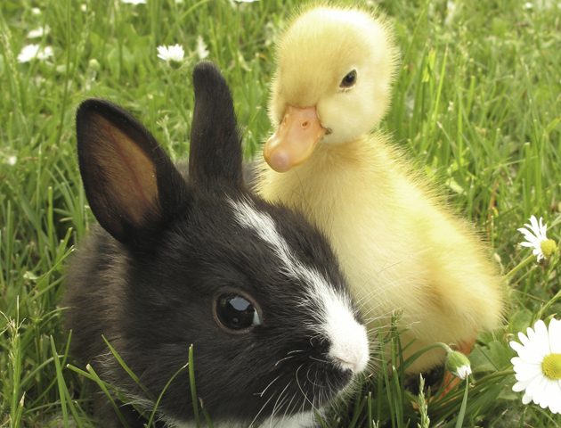 12 cute spring animals - Life Death Prizes - photo#3