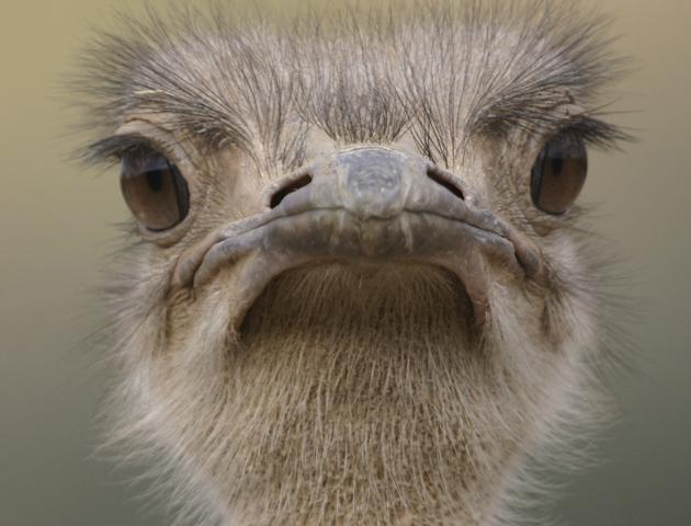 11 grumpy animals who'll raise your spirits - Life Death ...