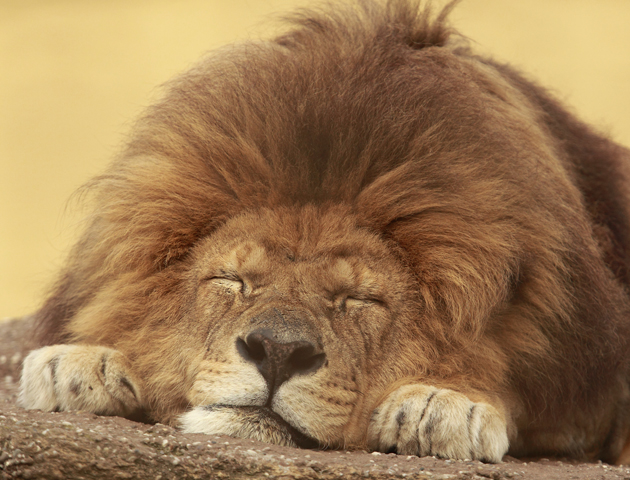 23 Cute Sleeping Animals You Ll Just Want To Squeeze
