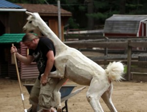 Fiesty Llama Attacks Zookeeper