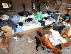 *** EXCLUSIVE - VIDEO AVAILABLE ***  PARLIER, CA - DECEMBER 18: Lynea Lattanzio in her living room at the Cat House on the Kings on December 18, 2015 in Parlier, California.  A caring cat lady has given up her 4,200 square foot home to more than a thousand felines. Sixty-seven-year-old Lynea Lattanzio now lives in a trailer on her six acre property and allows the cats to run freely through the five bedroom house. Today she runs Cat House On The Kings which is California?s largest no-cage, no kill sanctuary for feral and abandoned cats. Lynea and her team of volunteers care for about 800 adult cats and 300 kittens. The team starts feedings at the shelter at 4am and they also give medical attention to critically ill cats. To learn more about adoptions at Cat House On The Kings visit http://www.cathouseonthekings.com   PHOTOGRAPH BY Ruaridh Connellan / Barcroft USA  UK Office, London. T +44 845 370 2233 W www.barcroftmedia.com  USA Office, New York City. T +1 212 796 2458 W www.barcroftusa.com  Indian Office, Delhi. T +91 11 4053 2429 W www.barcroftindia.com