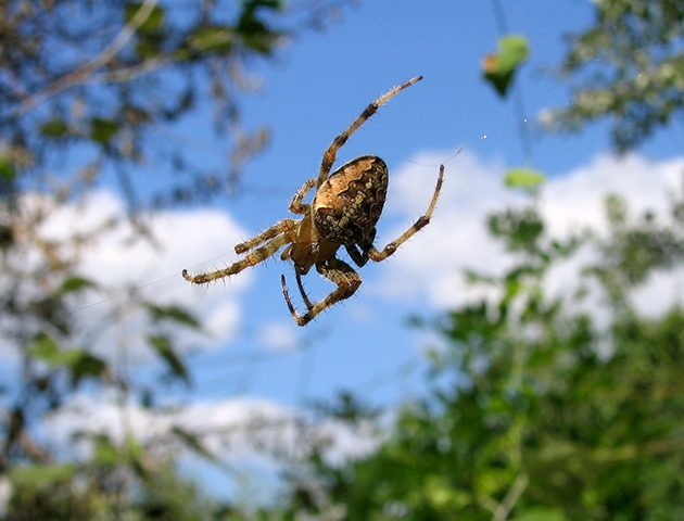 8 things you always wondered about spiders - but were too ...