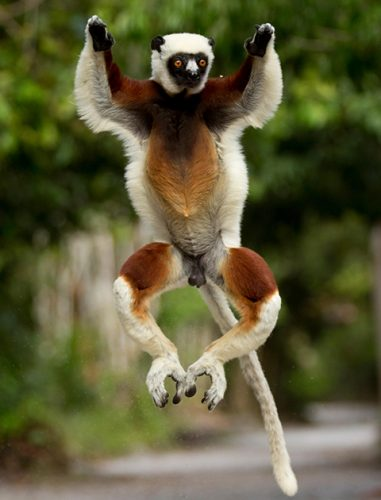 12 adorable jumping animals that are too cute for words