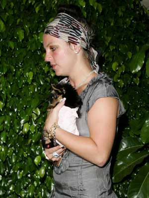Celebrities and their dogs: Britney Spears cuddles her tiny pooch