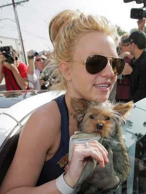 Celebrities and their dogs: Britney Spears loves London