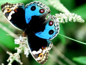 Butterfly | Glee Quiz | Pictures | Photos | New