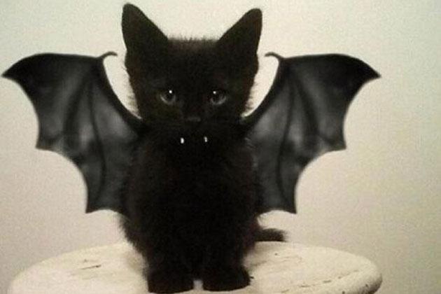 cat & 10 amazing Halloween pet costumes - Womanu0027s own