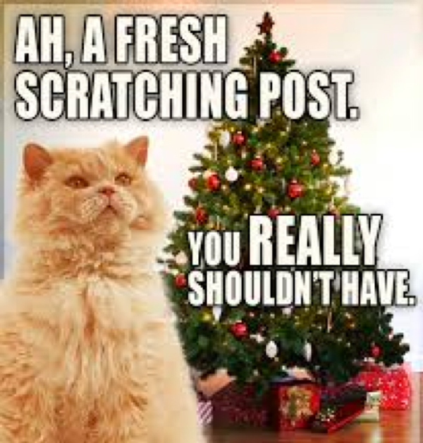 Are Christmas Trees Bad For Cats: Cats And Their Destruction Of Christmas Trees, Ornaments