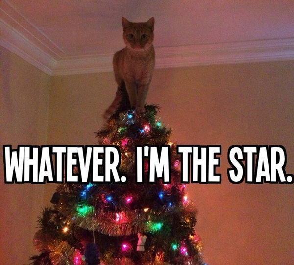 Keep Cat Away From Christmas Tree: What Happens When You Unleash A Legion Of Cats Into A Room