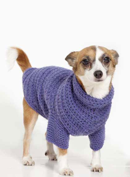 Beginner Knitting Patterns For Dog Sweaters American Go Association