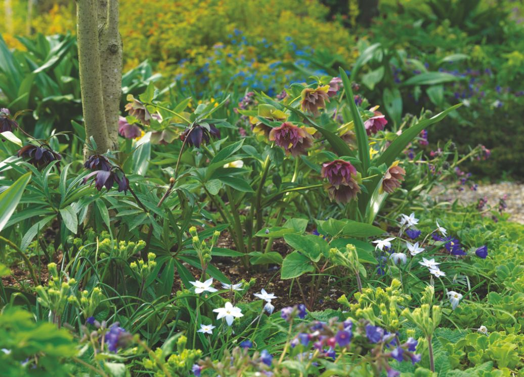Garden Design Plans Rosemary Alexander Shares 10 Top Tips