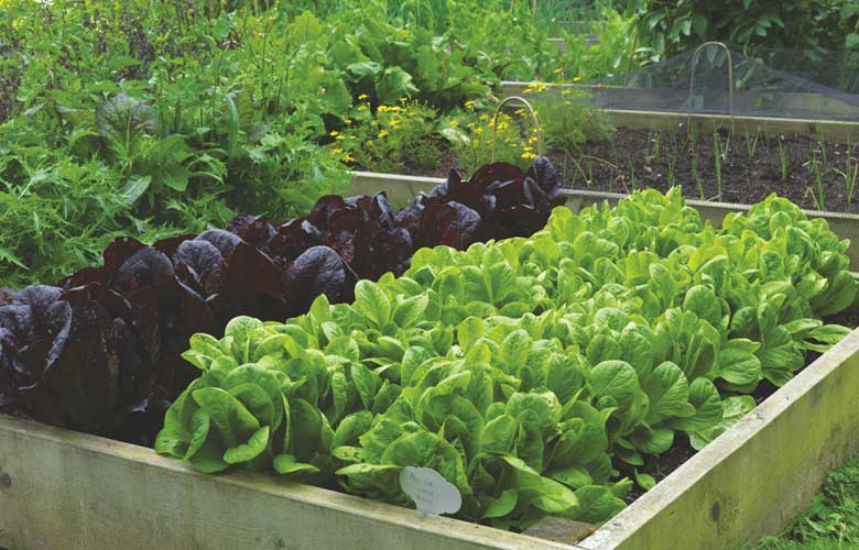 DO NOT USE: 8 Top Tips For Growing Vegetables