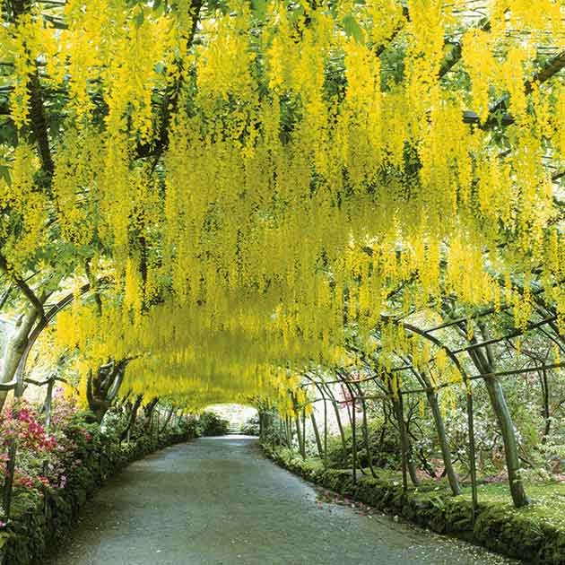 Lovely Gardens gardens to visit: wales is glorious in spring