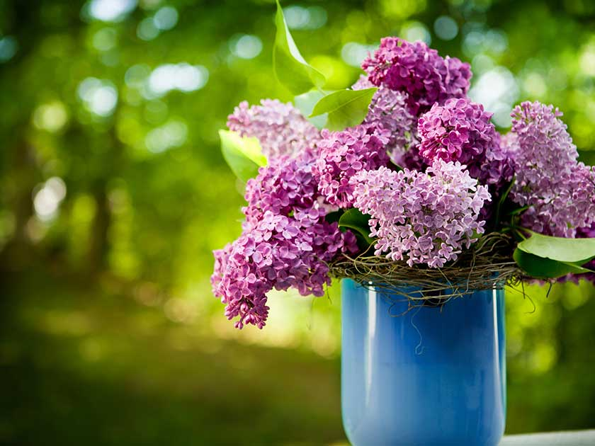 Select and Care for Flowering Shrubs