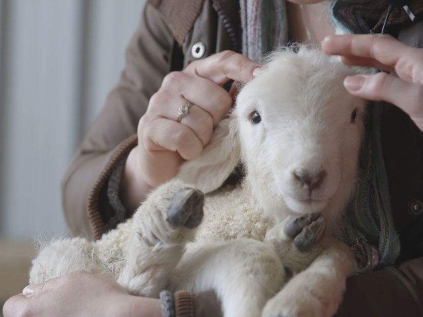 Help us name the Woman's Weekly lamb