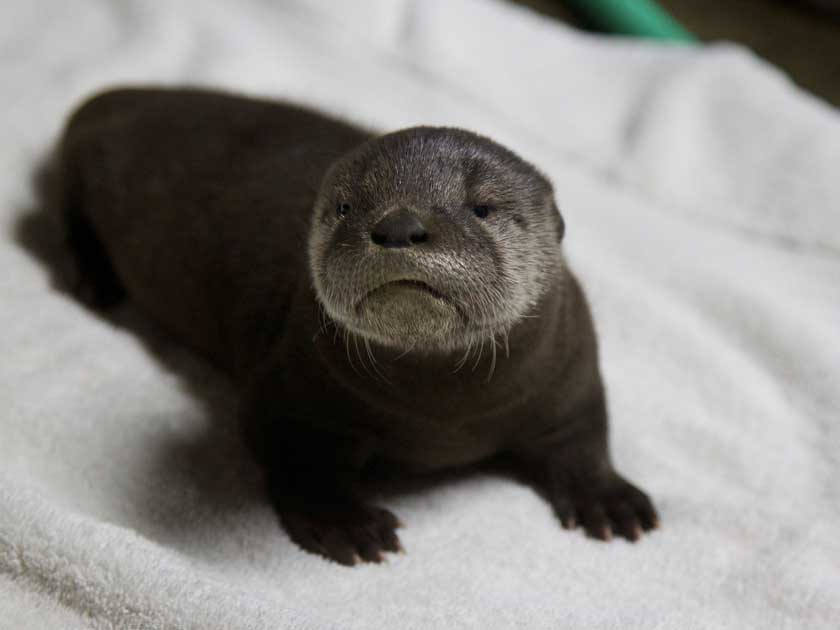 What Is The Name Of An Otter S Home