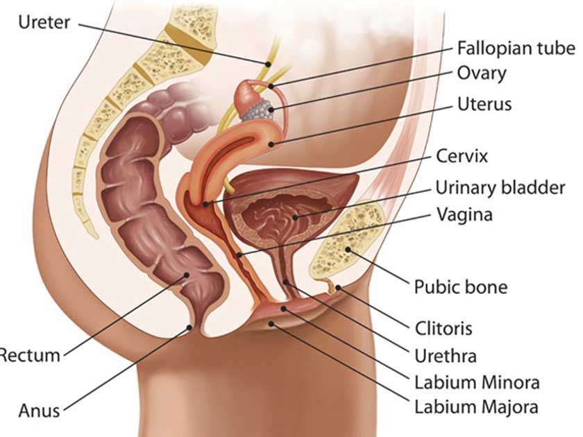 Cervical cancer symptoms: How screening can save your life