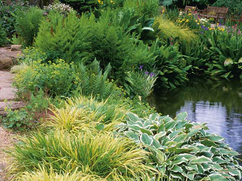 How to maintain your garden pond for Maintaining a garden pond
