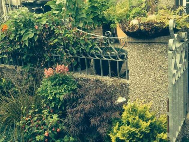 Claire Goodrum's garden