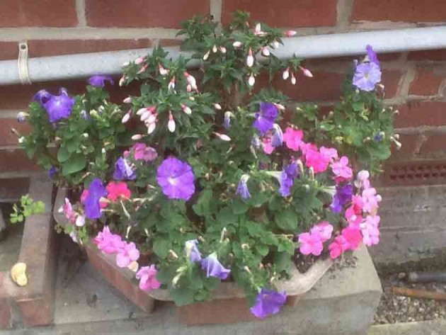 Elaine Pannell's garden