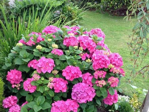 Liz Lyness' garden