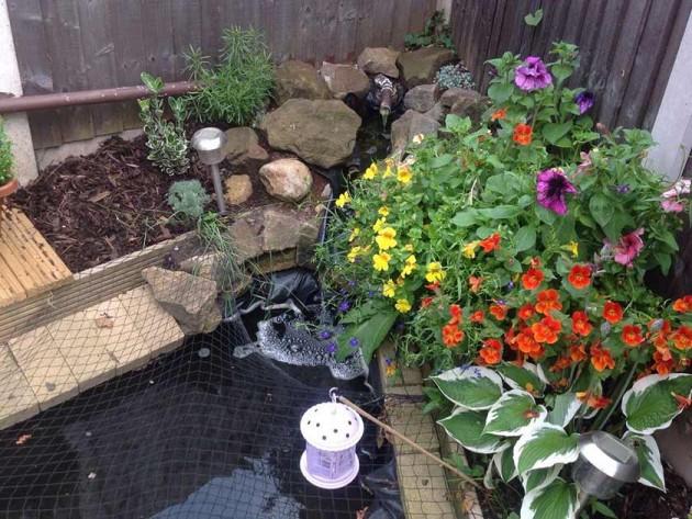 Liz Sidley's garden