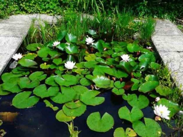 Liza McMenamin's mum's lily pond