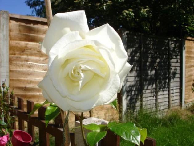Maggie Lewin's garden