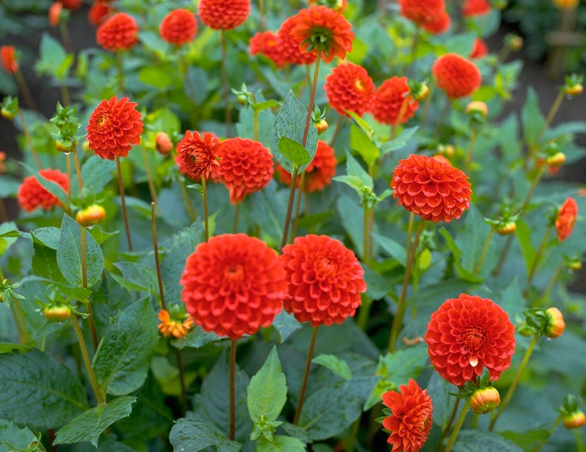 Perfect perennials plant and flower ideas womans weekly flower beds stuffed with plants is the key to creating a great garden and reliable perennial favourites like bee balm or monarda which attract pollinators mightylinksfo