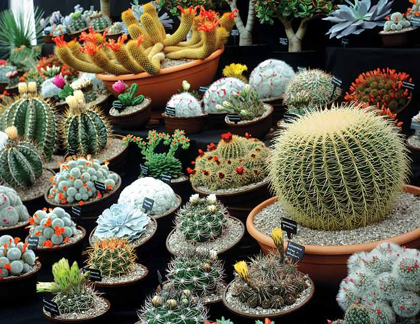 Cactus Tips How To Care For Your Cacti Womans Weekly