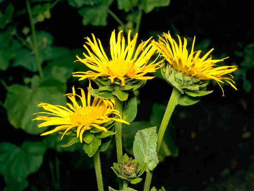 How to win the garden weed war womans weekly weeds mightylinksfo