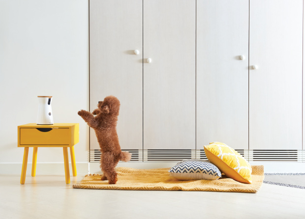 Furbo smart pet dispenser