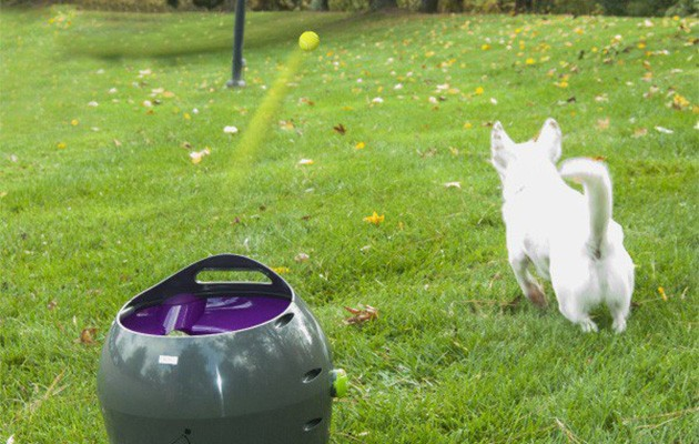 PetSafe automatic ball thrower