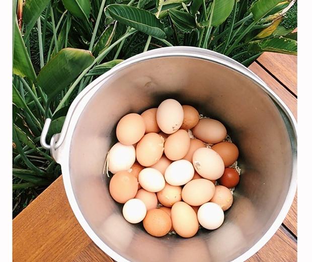 jennifer aniston chicken eggs
