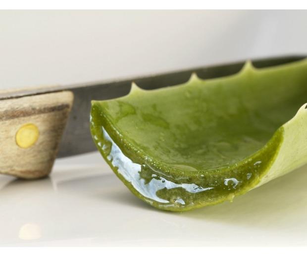 We explore the benefits of aloe vera juice