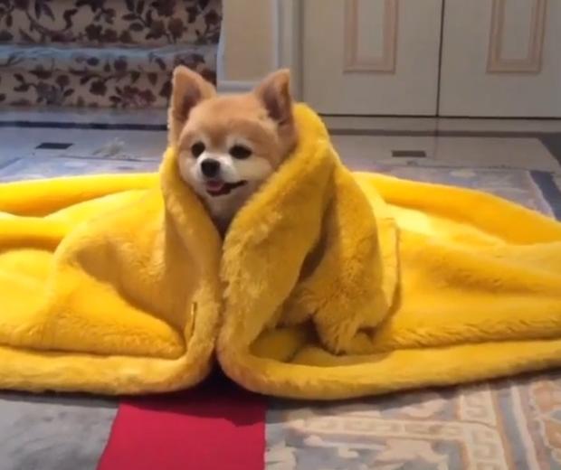 rihanna met gala dress dog video meme