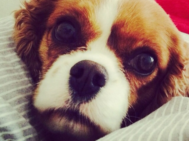 Binky Felstead's dog in Instagram photo