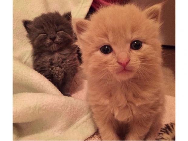 Cats Of Instagram cute kittens