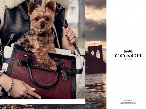 Miranda Kerr's dog modelling for Coach