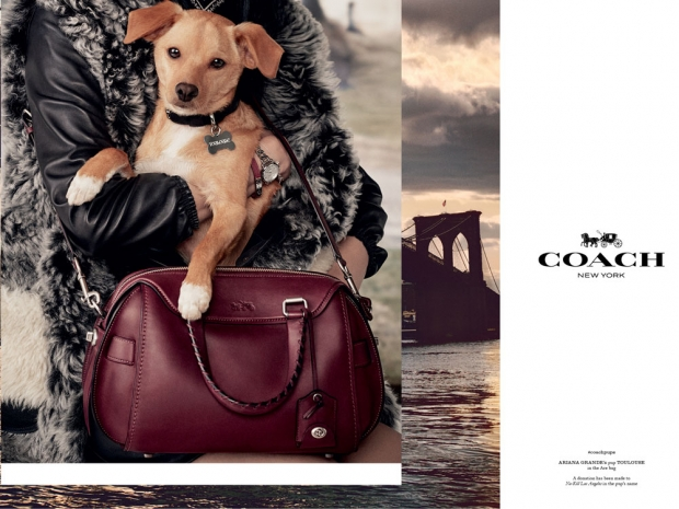 Ariana Grande's dog modelling for Coach