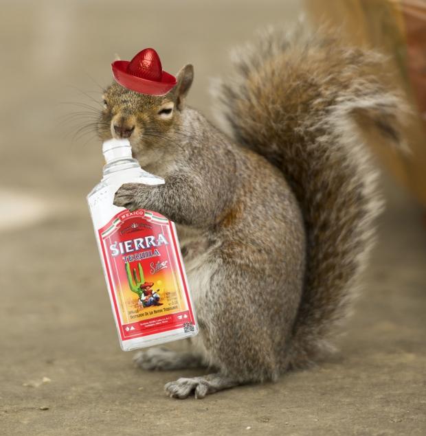 Squirrel Tequila