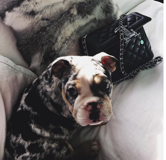 Kylie Jenner new puppy
